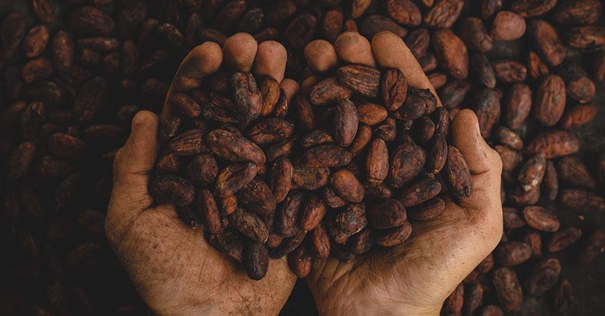 Alla scoperta del cacao: Afrodisiaco naturale e tante altre proprietà