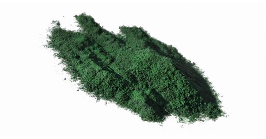 Focus sulle Piante: Alga Spirulina