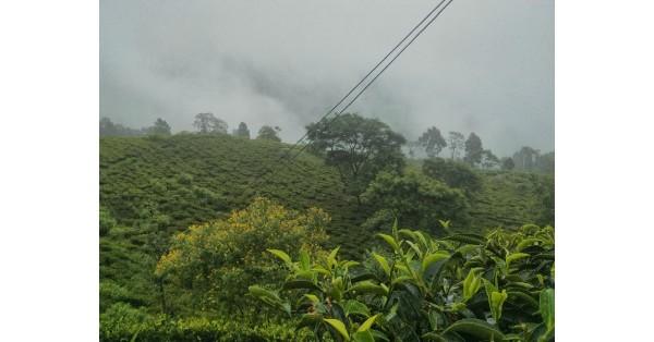 La raccolta del tè: Il nostro viaggio tra India e Nepal Pt.2