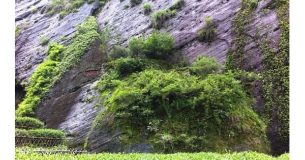 I tè Oolong di Roccia di Wuyi Yan Cha