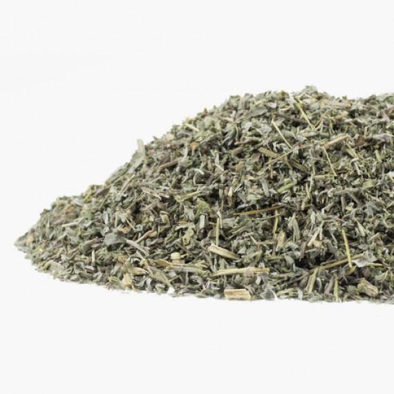 Assenzio, Artemisia absinthium