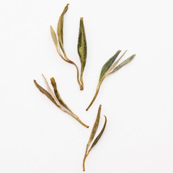 Huo Shan Huang Ya -tè giallo-