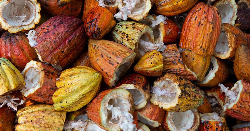 frutto dell'albero di cacao