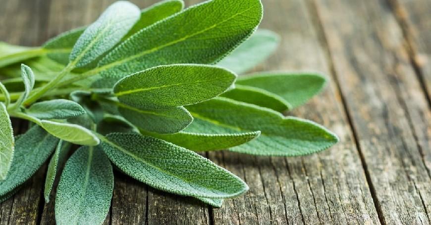 salvia in menopausa