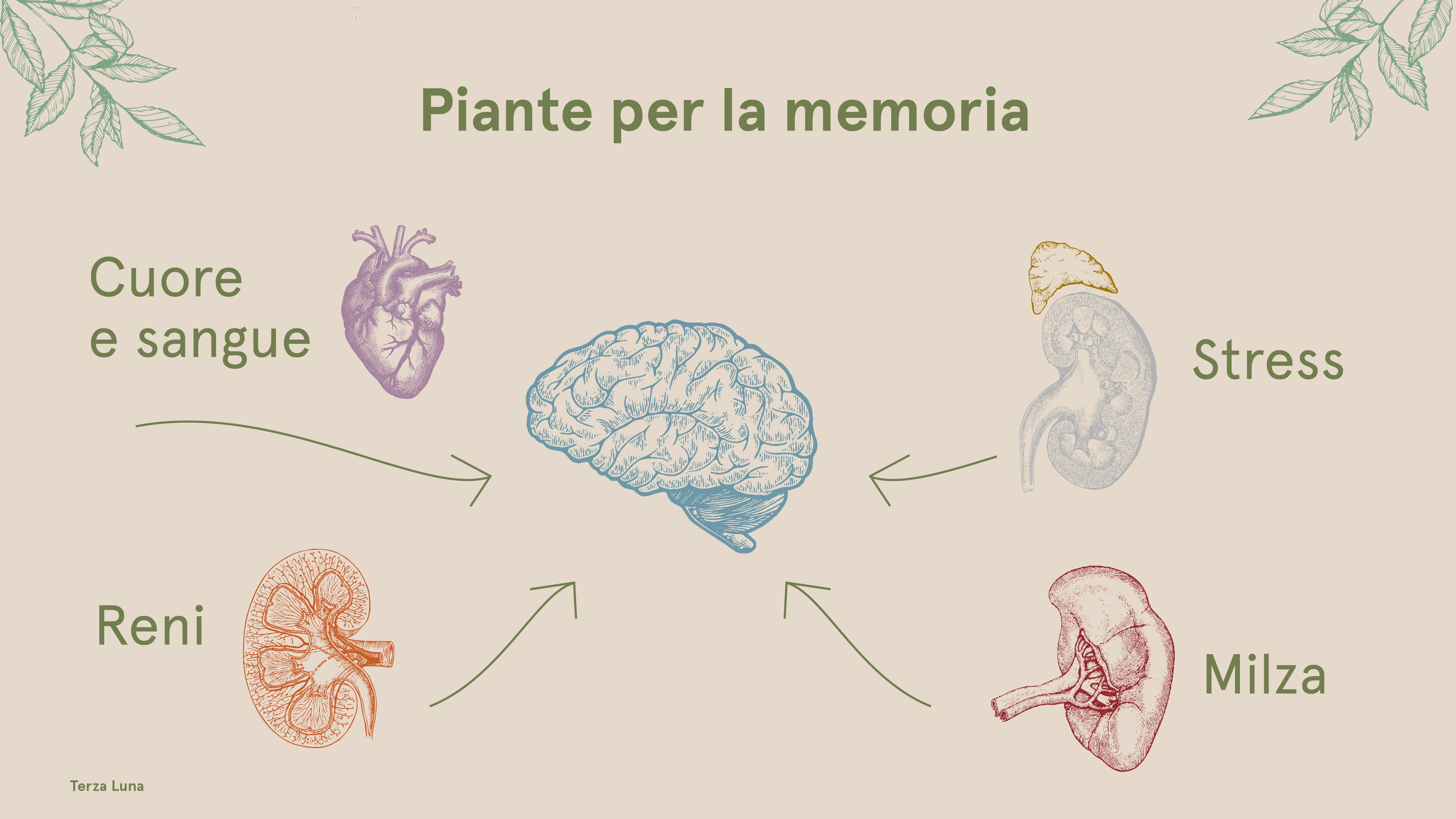 rimedi per la memoria