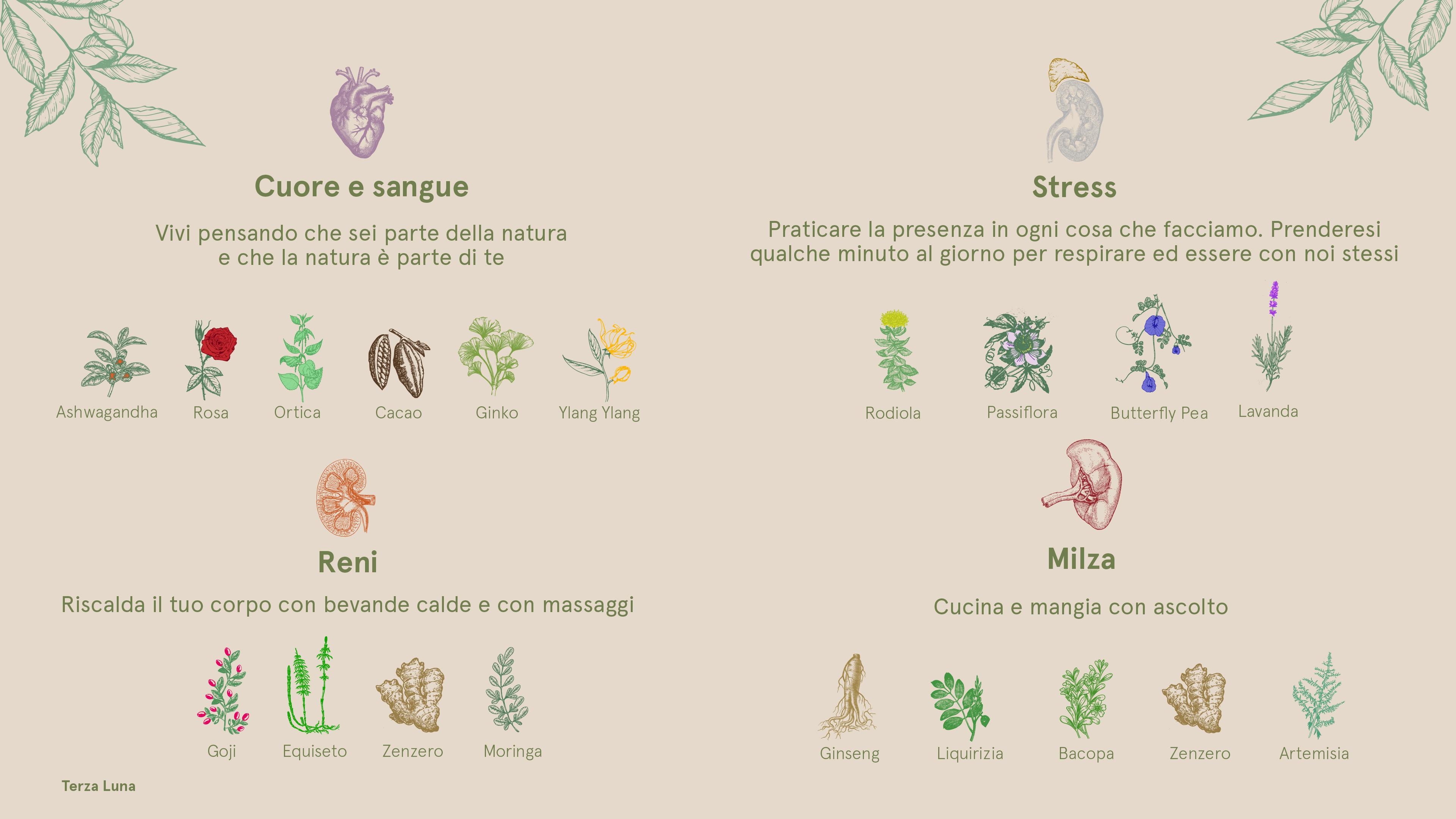 piante per la memoria