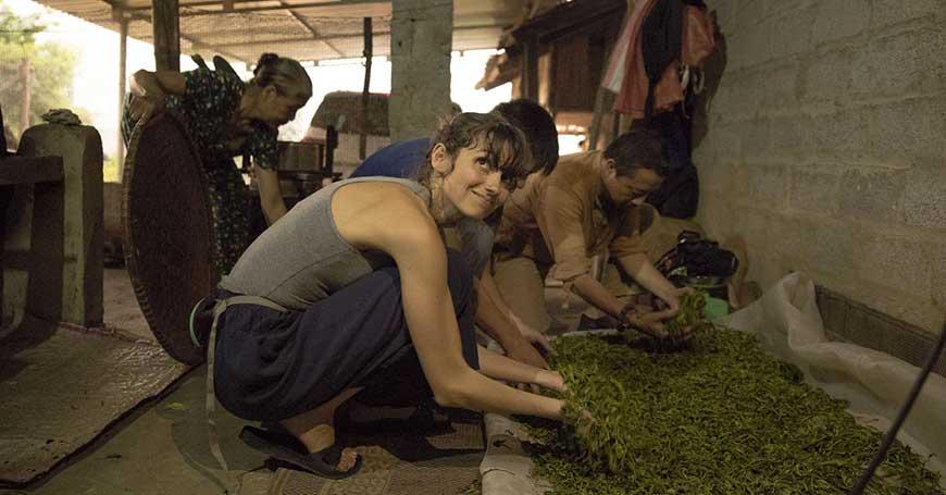 raccolta del tè in vietnam